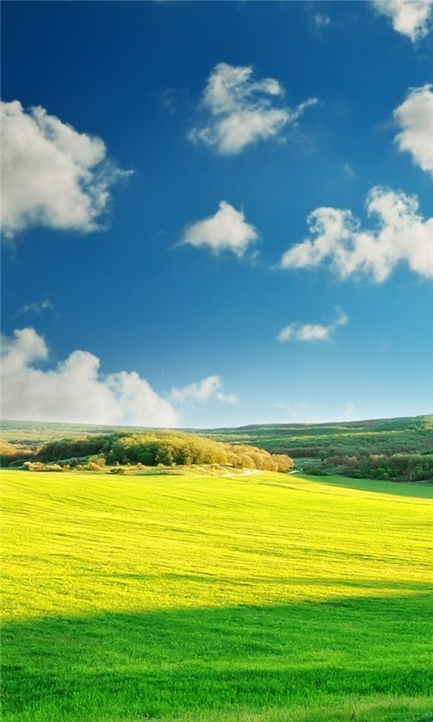 Wonderful Nature Windows Phone Wallpaper