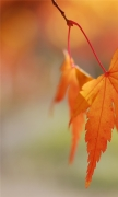 Orange Leaves Bokeh