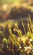 Moss Morning