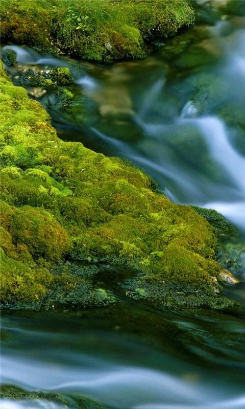 Nature Closeup Windows Phone Wallpaper