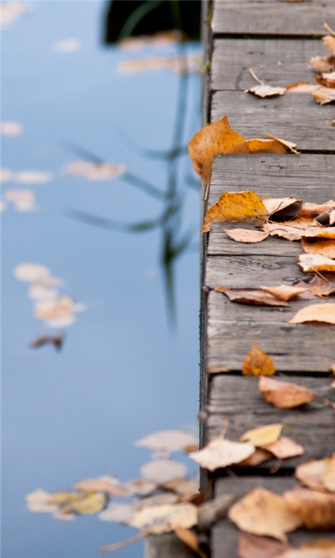 Autumn Leaves On Wooden Bridge Windows Phone Wallpaper