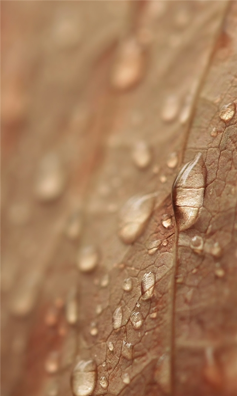 Brown Drops Windows Phone Wallpaper