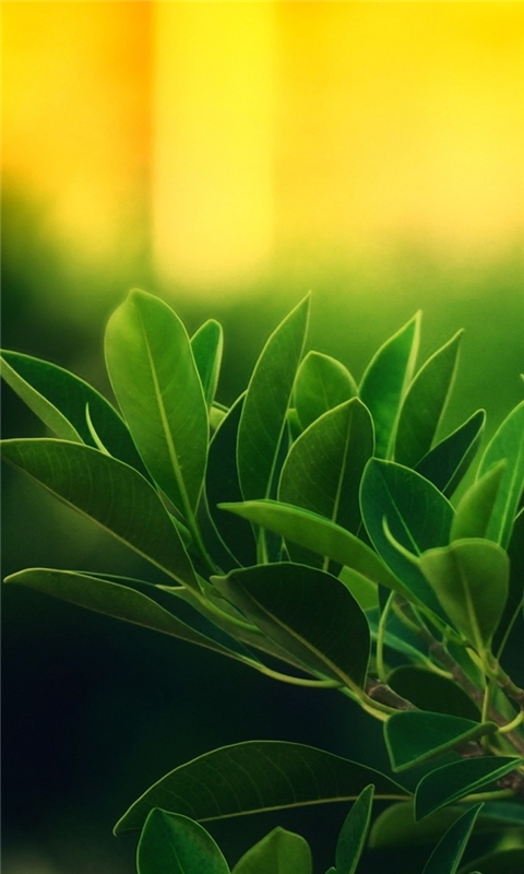 Plants with Sunrise Windows Phone Wallpaper