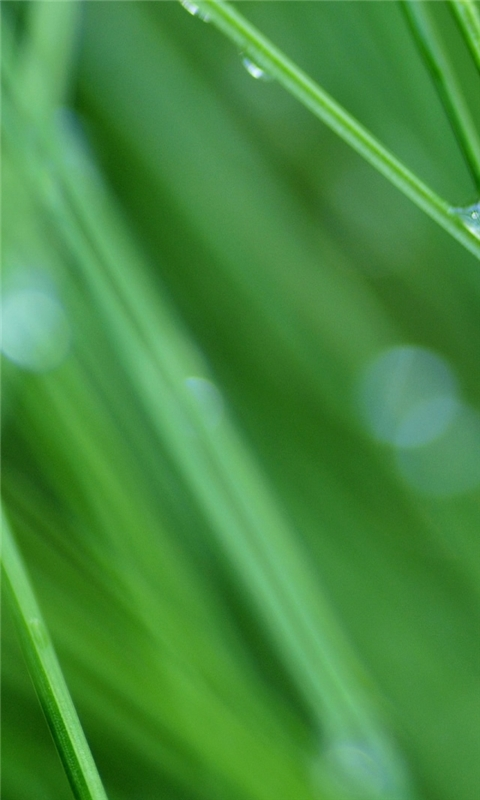 Grass Drops Windows Phone Wallpaper
