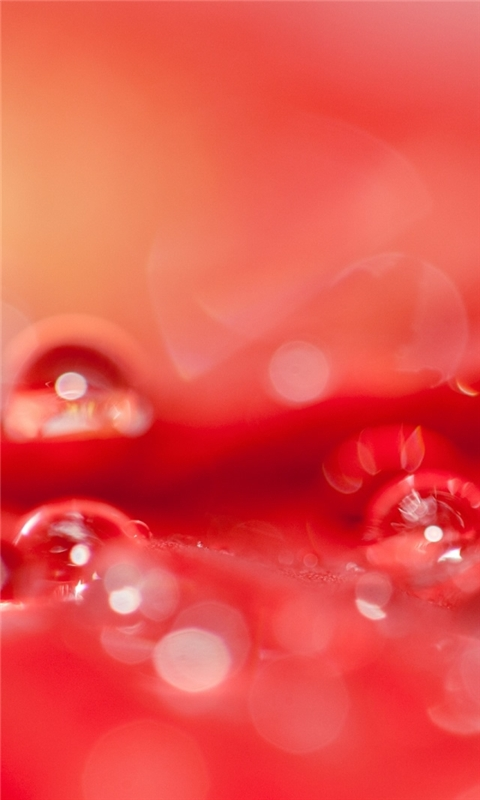 Beautiful Water Drops On A Red Flower Windows Phone Wallpaper