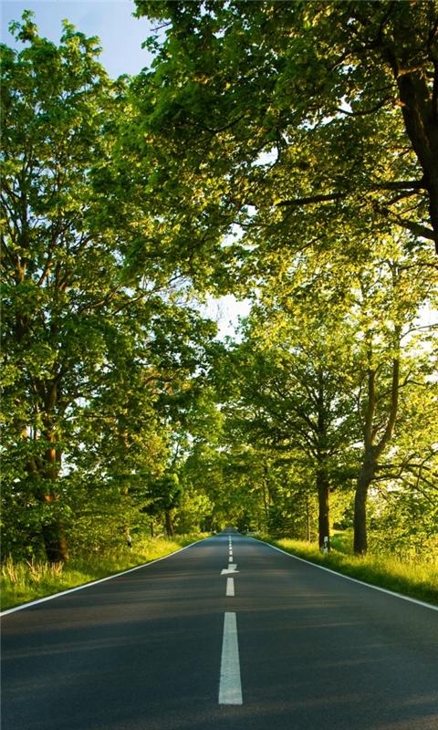 Road Summer Windows Phone Wallpaper