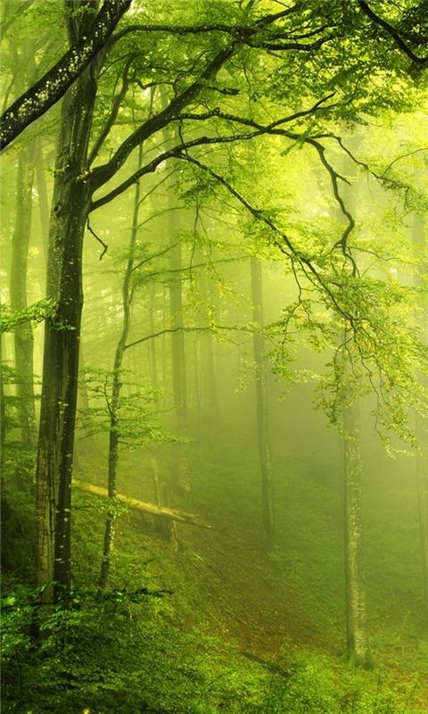 Beautiful green forest Windows Phone Wallpaper