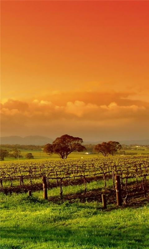 Colourful Sunset Windows Phone Wallpaper