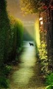 Dawn cats