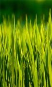Summer Grass Macro