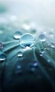 Pure Dew Closeups