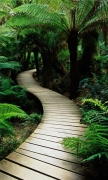 Wood path in the jungle