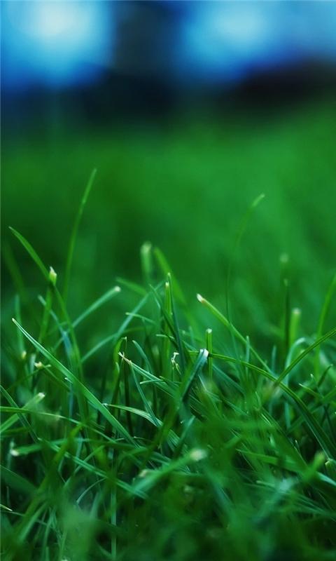 Grass Closeups Windows Phone Wallpaper