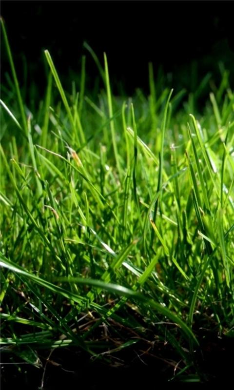 Grass Macro Windows Phone Wallpaper