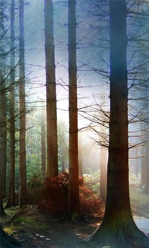 Fog amongst trees Windows Phone Wallpaper