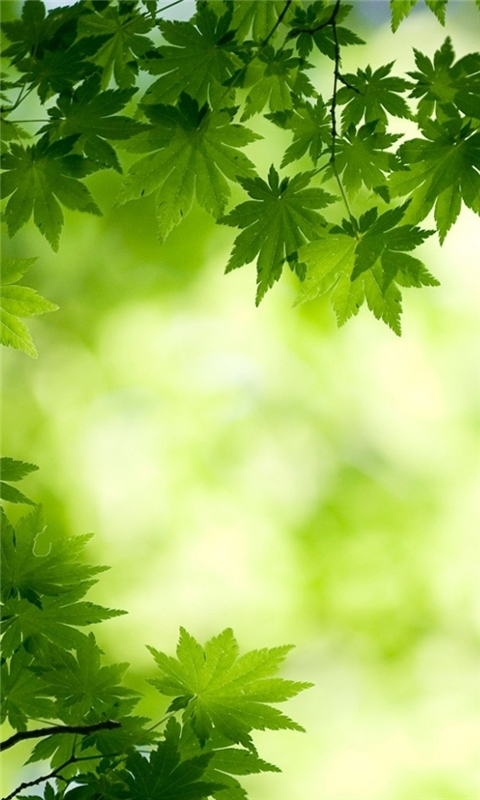 green maple leaves Windows Phone Wallpaper