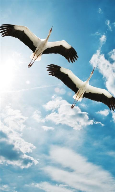 Storks Windows Phone Wallpaper