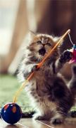 Lovely Playful Kitten
