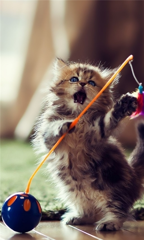 Lovely Playful Kitten Windows Phone Wallpaper