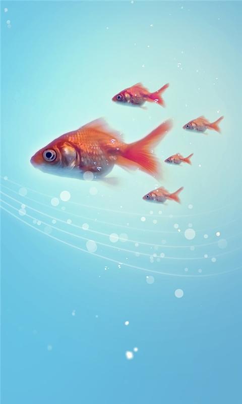 Goldfish Windows Phone Wallpaper