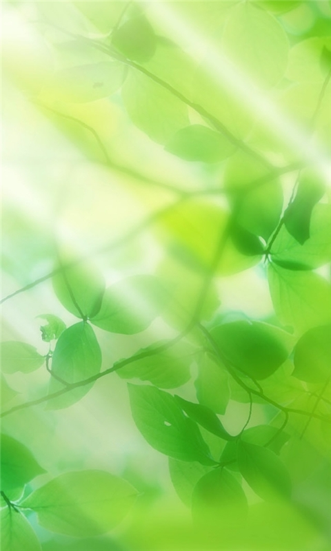 Green leaves and sun ray Windows Phone Wallpaper