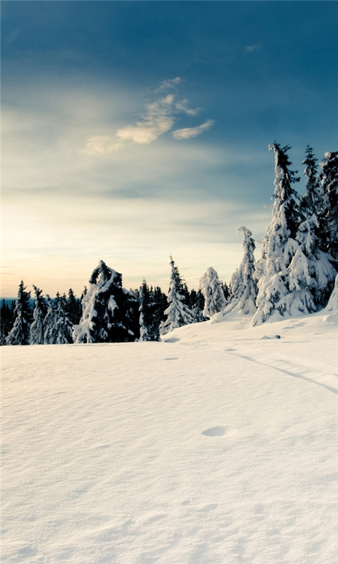 Snow Forest Windows Phone Wallpaper