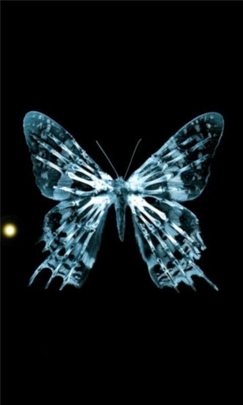Butterfly fringe Windows Phone Wallpaper