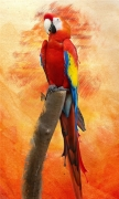 Colorful Parrot Art