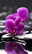 Orchids Purple