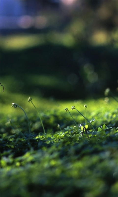 Grass Level Windows Phone Wallpaper