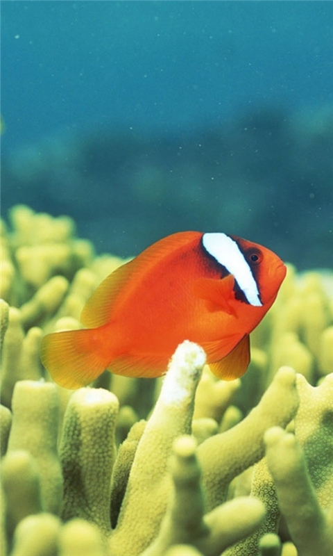 Fish at the Bottom of the Sea Windows Phone Wallpaper