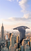 Bird Fly by Manhattan