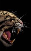 Angry Wild Cat