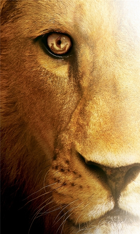 Aslan Lion Windows Phone Wallpaper