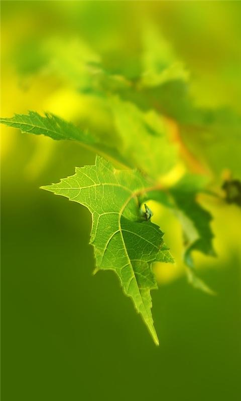 Green Leaf Macro Windows Phone Wallpaper