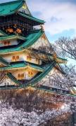 Japanese House in Sakura