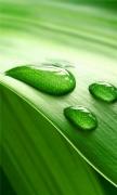 Leaves Dew Closeup